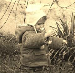 ELSA ET LES FLEURS (Olivier Simard Photographie) Tags: portrait fleur sepia enfant enfance oliviersimard photographieoliviersimard copyrightrservoliviersimard oliviersimardphotographie