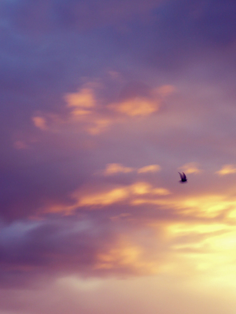 Vuela pájaro, vuela..