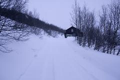 _MG_7764 (Bo Mertz) Tags: norway no buskerud myrland