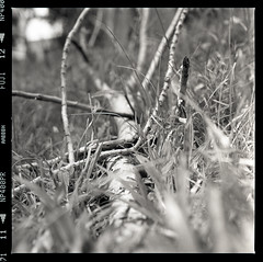 the fallen (S.H.CHOW) Tags: trees blackandwhite bw 6x6 grass mediumformat square kodak iso400 hc110 120film hasselblad neopan f28 planar 80mm 500cm fujineopan400 selfdeveloped homedeveloped filmography 10mins np400pr bathroomdevelopment 285c dilutionfg dilution1100 kodakhc1101100 shchowphotography 20090518500cmfnp400007web800  loveblackandwhitephotography
