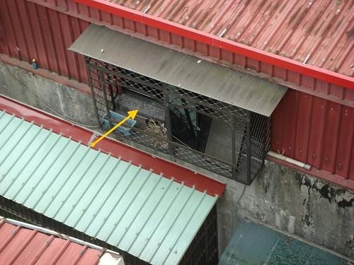 笨賊從這邊鐵窗跳出