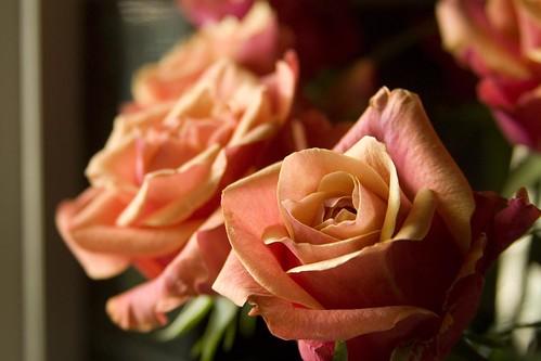 Roses (II)