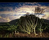 Sunset in our Garden (Chantal Steyn) Tags: wood sunset sky plants mountain fern tree green clouds moss nikon vegetation bracken d300 nohdr phylica nikkor1685mm goughisland cokinneutraldensityfilterp120