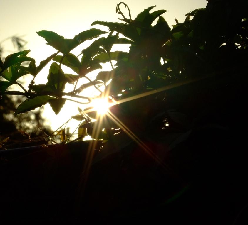 sun pic 03