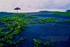 the natural carpet....... [Cox's Bazaar Beach, Bangladesh] (Ideas_R_Bulletproof) Tags: green beach nature rain clouds season carpet nikon colours natural f65 bazaar bazar coxs nikkoraf24mmf28d