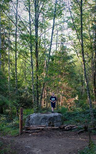 bobcat in the woods