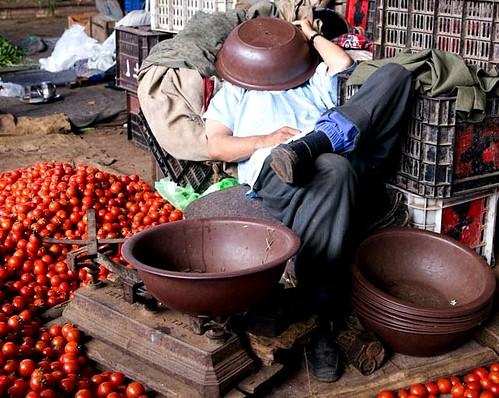 Moroccan tomato merchant's siesta