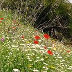 Flowers Montejaque