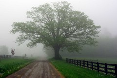 vanishing into the fog (J-Parkes) Tags: mist tree fog pentax pennsylvania pa clarion da1855 k200d