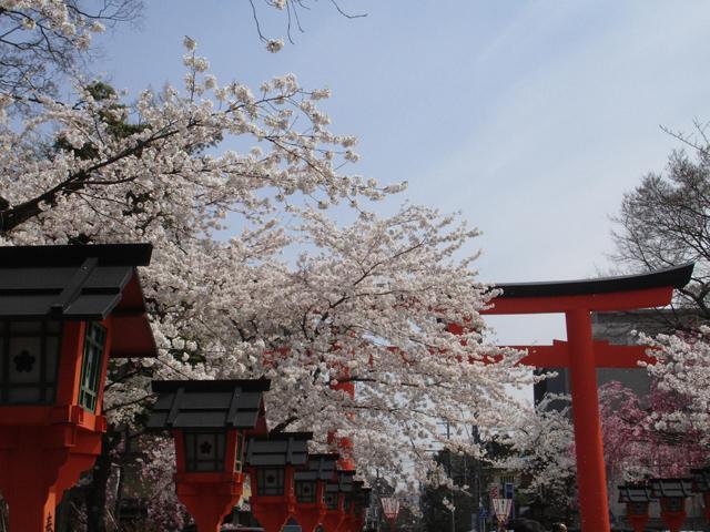 平野神社の桜02