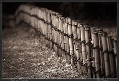Jindai Botanical Gardens fence sepia