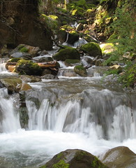 Swanson Creek (Sveadal, California, United States) Photo
