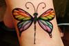 Híbrido Borboleta-libélula --- Butterfly-dragonfly
