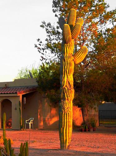 Cactusfromfarmlane