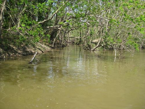 tributary1.jpg