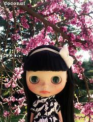 Spring Broo