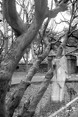 Lady Ghost! (Lindsay_Silveira) Tags: show trees india white black nature lady forest movie real photography scary graphics image ghost picture surreal manipulation haunted spirits spooky horror unreal sari pune supernatural