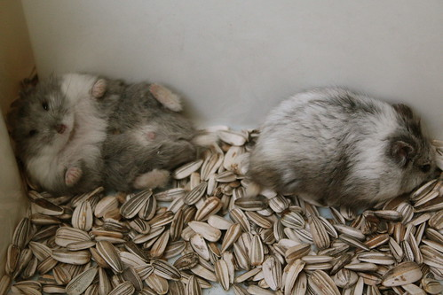 My hamster 6