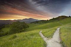 Fork In The Road - Walnut Creek, California