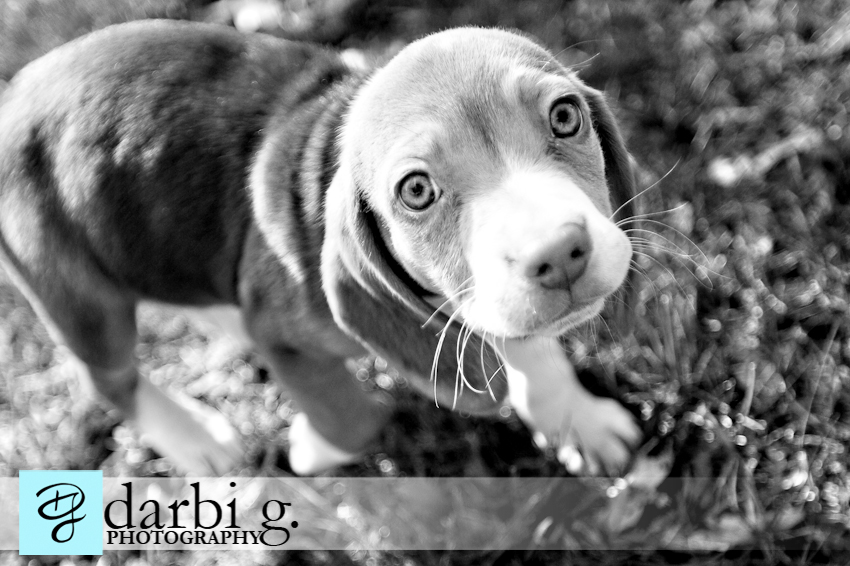 Darbi G photography-dog puppy photographer-_MG_9792-bw