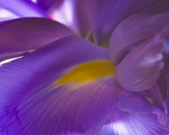 Purple Flower Close-up (RMac_Photography) Tags: flower macro art yellow closeup d50 nikon pretty purple rmac awesomeblossoms