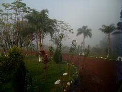 NIEBLA ...para Guille (Mirilamadrid) Tags: verde argentina palmeras niebla sendero misiones tierra rojos tierracolorada minasdewanda mirilamadrid