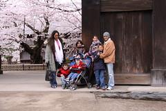 Family, cousin, and Bro (mdrolli) Tags: cherry blossoms hirosaki