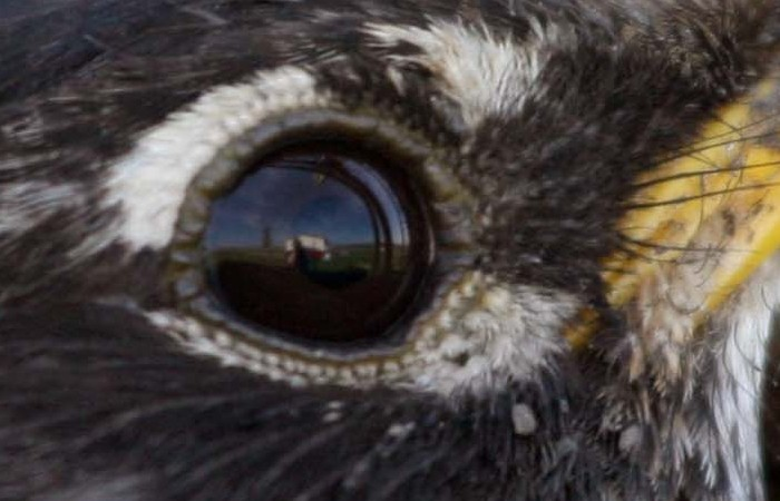 my reflection in a robin's EYE!