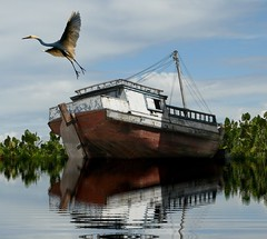 The heron and the old boat. (land.nick) Tags: old nature birds boats rainforest rivers bec rios garas herons egrets amazonia mywinners aplusphoto theperfectphotographer 100commentgroup saariysqualitypictures flickraward obramaestra