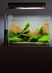 ADA Mini M (Johnny Ciotti) Tags: wood nature glass john aquarium ada moss aqua lily pipe driftwood scape 1000 drift 1000views co2 amano aquascape minim rotala ciotti natureaquarium jciotti