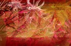 2982 Florales (Supply Impresin Digital) Tags: flowers flores beautiful rose deco rosas lindas follaje margaritas girasol supply lilas motivos florales supplydeco