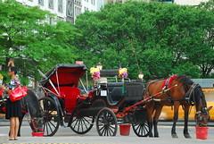 Carriage ride? (kstraw2) Tags: nyc newyorkcity people horse usa newyork america carriage unitedstates centralpark manhattan cab diversity boroughs bigapple millions hansom gorillapod americashometown nikond80 kstraw2