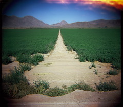 Kodak VS (kevin dooley) Tags: redrockcanyon camera old blue red orange brown mountain west green film water analog convergent lens vanishingpoint lomo lomography saturated highway ditch desert very kodak farm line plastic dirt diane cotton crop medium format vs es 80 unnamed sonoran range extra irrigation vp converging cottoncenter