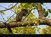 Annan kunjinu thannalaayathu... (Gopa_kumar) Tags: yellow kerala s5 kanikonna