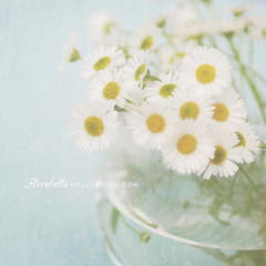 A Little Sunshine... (Shana Rae {Florabella Collection}) Tags: life flowers blue texture water sunshine spring still weeds blossoms vase rae shana monday gratitude florabella shanarae florabellatextures