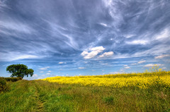 England: Northamptonshire - Sunny Day Haze (Tim Blessed) Tags: uk sky tree nature clouds landscapes countryside scenery fields singlerawtonemapped