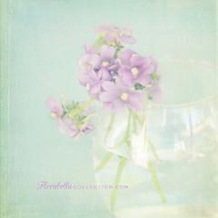 Vintage Violet II (Shana Rae {Florabella Collection}) Tags: life flowers stilllife vintage still nikon violet 85mm frontpage explore5 shanarae florabellatextures