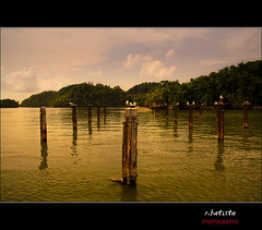 Saman #7 (r.batista) Tags: vacation seagulls green nature colors clouds landscape gold spring dominicanrepublic countries 2009 saman