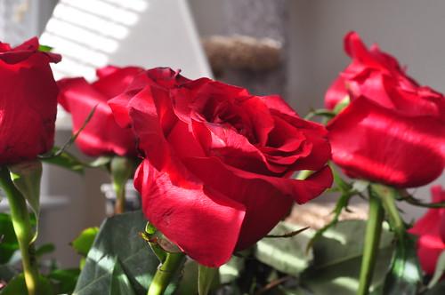 of Winston Flowers Roses