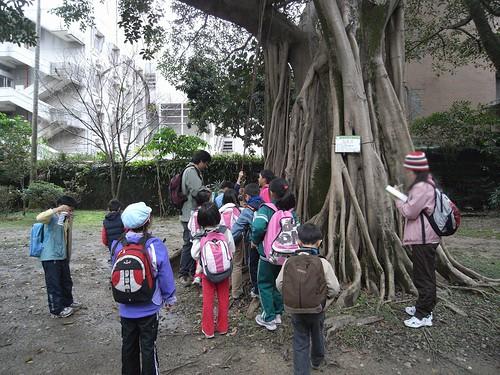 你拍攝的 54榕樹。