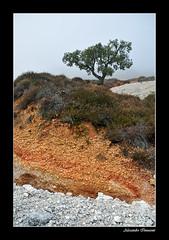 Parco naturalistico delle Biancane - IV - Geothermal park (Alessandro Innocenti) Tags: panorama tree fog landscape nikon nebbia albero gmt d300 biancane visipix
