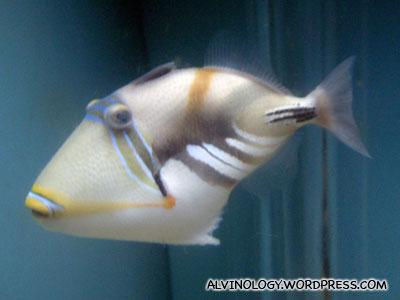strange looking marine fish