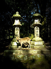 (yocca) Tags: cameraphone mobile wow shrine cellphone deer nara  2009   kasugataisha   feb2009 20090228115540w63ca