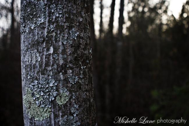 I Lichen You