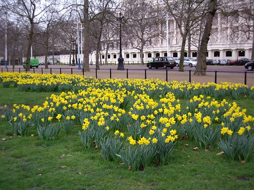 DAFFODILS IN ST, <b>Petcam craiglist</b>.  <b>100mg Petcam</b>, JAMES PARK, LONDON