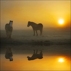 Just the two of us! (adrians_art) Tags: morning horses sun mist reflection water weather animals silhouette sunrise for mammals superfaveme theunforgettablepictures