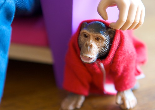 chimp in shirt