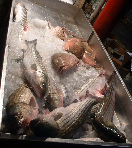 Fish - 10