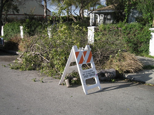 pile of cut-up tree that fell down in LA windstorm