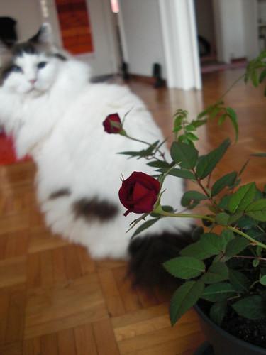 March.23.2009 Mini Rosen